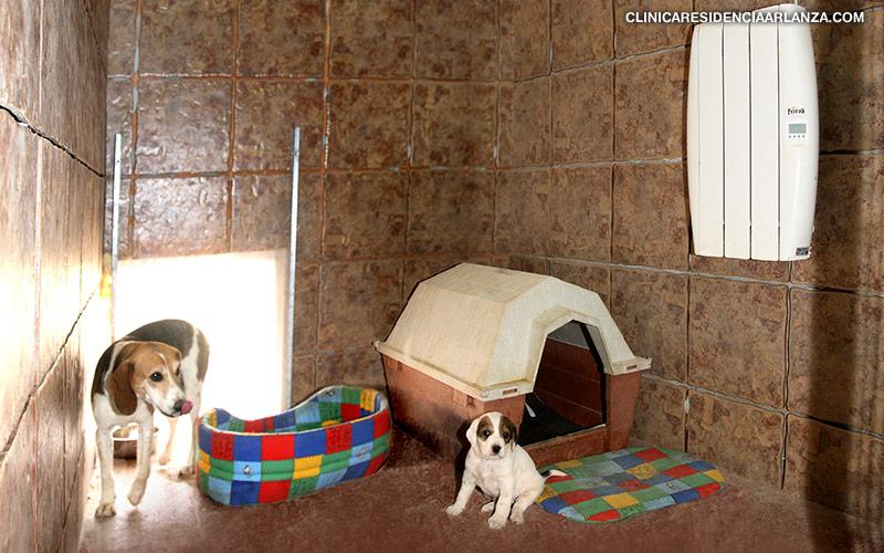 Guarder 237 A Residencia Canina Y Felina En Burgos Instalaciones Adecuadas Cuidados Personalizados